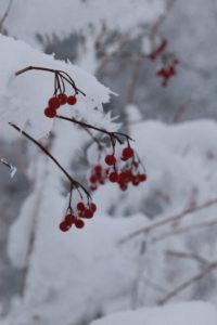 berries_2010 02 Dez_2554_