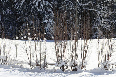 winter_1968__