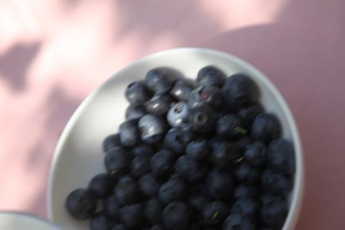 Blueberries_2011 23 Aug_7595_
